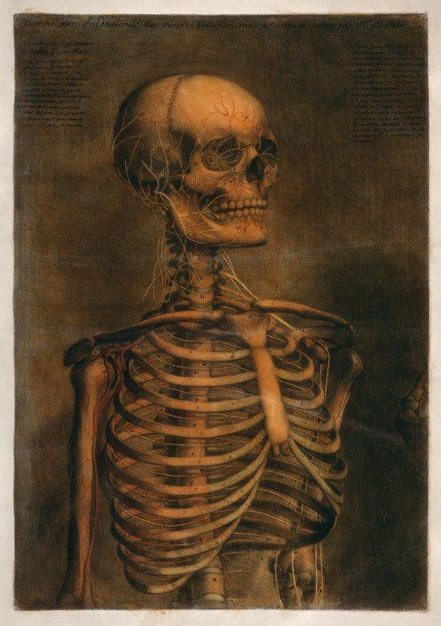 From the Anatomical Atlas, Jacques Fabian Gautier d'Agoty (1717-1785)