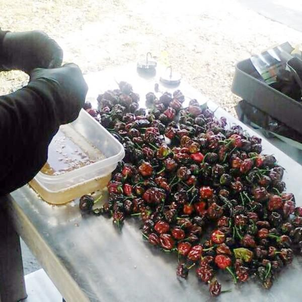 Big Black Mamaproduces lots of BIG hot peppers. We think it should be called the Bountiful Big Black Mama. It's a cross between Naga Morich and 7 Pot Trinida