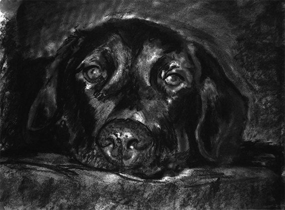 Black Labrador print, Charcoal Lab artwork, Black Lab dog portrait, Labrador dog gift, Dog drawing, Black and white… #dogs #etsy #art