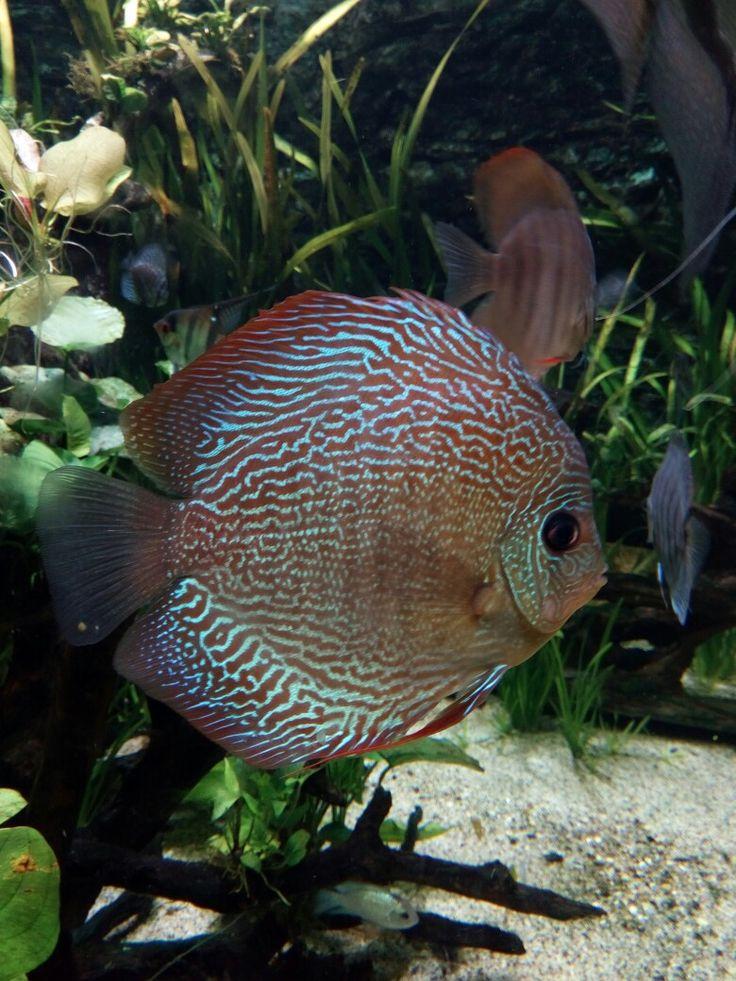 #fish