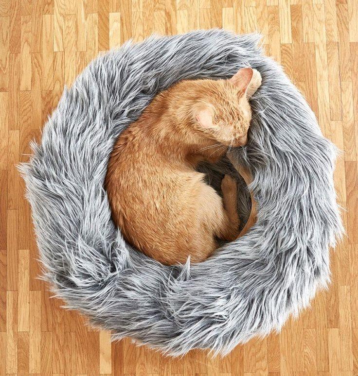 les 25 meilleures id es de la cat gorie panier pour chat sur pinterest. Black Bedroom Furniture Sets. Home Design Ideas