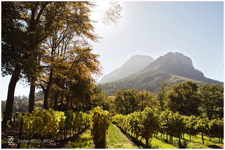 Molenvliet Wedding Venue in Stellenbosch rates as one of our top 10 weddings in the Western Cape - this photo was taken in early Autumn.