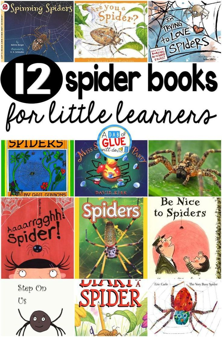 Spiders: Learning to Love Them Paperback - amazon.com