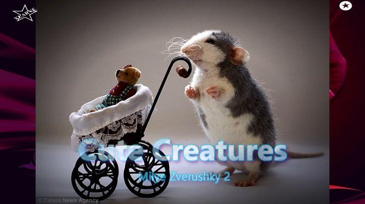 Cute Creatures -  milye zverushki 2 ( Photos ) xLArve - Deep Nite