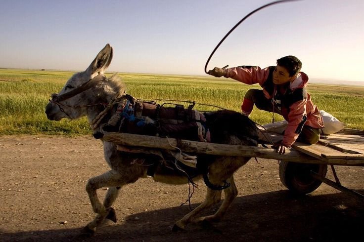 Photo by @edkashi / @viiphoto. This photo taken in 2005 shows Rebas Mala Muhammad Amin traveling to work from Benislawa, the settlement near Erbil in northern Iraq, that was created in the late 1970's to accommodate displaced Kurds due to Saddam Hussein's Arabization program. Amin lost his mother during the Anfal campaign, and did not go to school in order to take care of himself and his father who was too old to work. He would buy scraps in his settlement and then try to resell them in the…