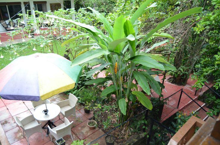 Garden hostel of bandung