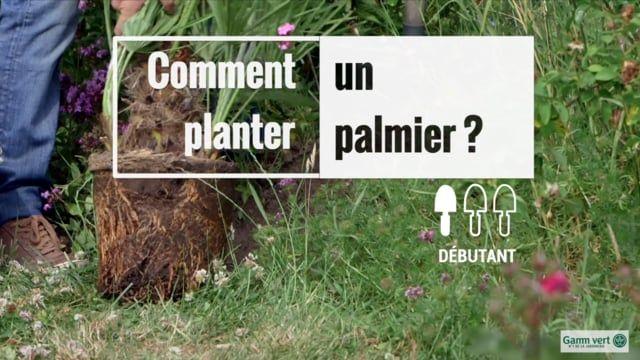 Planter un palmier   Jardinage   Planter un palmier ...