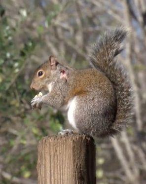 Ciepła zima też może być zabójcza dla zwierząt. http://tvnmeteo.tvn24.pl/informacje-pogoda/swiat,27/ciepla-zima-tez-moze-byc-zabojcza-dla-zwierzat,190725,1,0.html