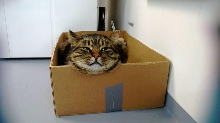Laatikot on ihania!