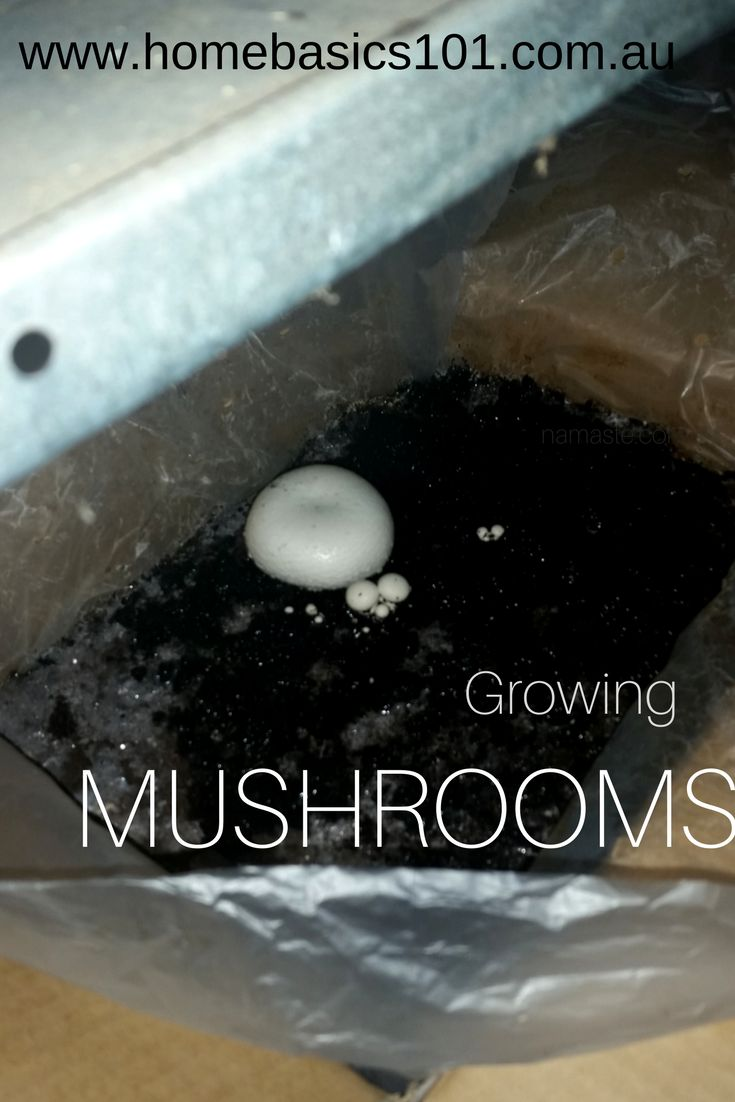 Growing Mushrooms  I don't know why but growing mushrooms has always been something I thought I couldn't do. I had it in my head that it'd be too hard, the climate would be too difficult to maintain and I'd never be able to find the right spot to grow them. I thought they would just be way too hard to grow. How wrong I was!  #Garden