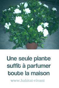 Les plantes n'ont pas qu'une fonction de décoration d'intérieur. Elles agissent aussi sur notre bien-être