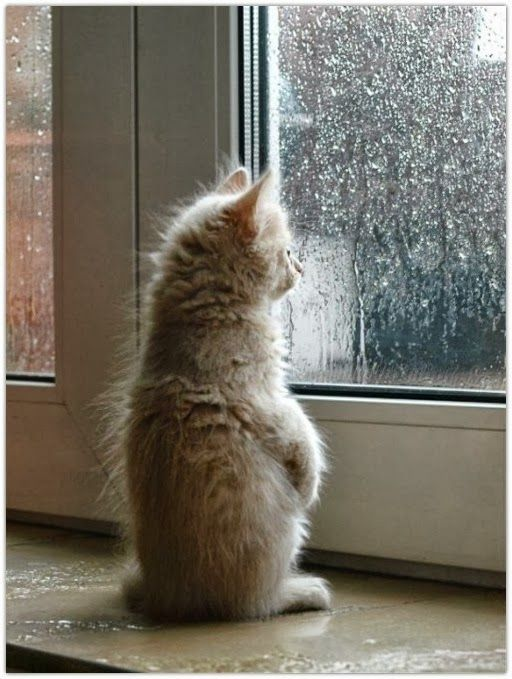 watching the rain - Fashion Chalet