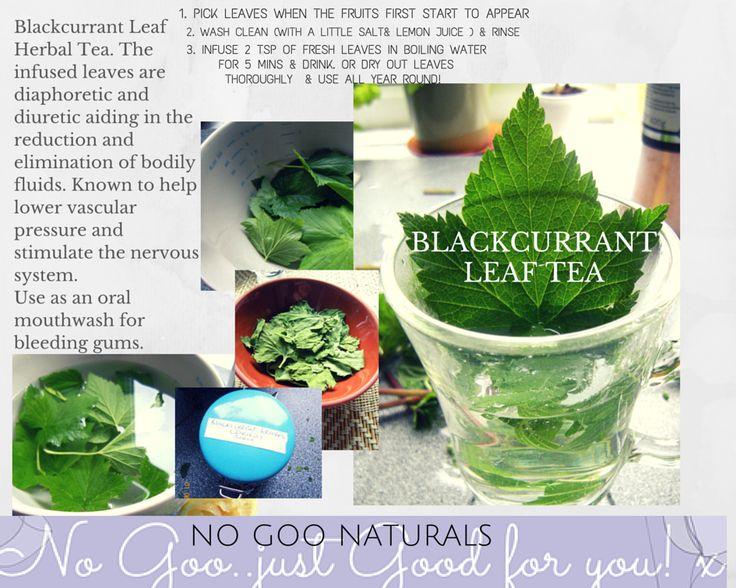 Blackcurrant Leaf Tea