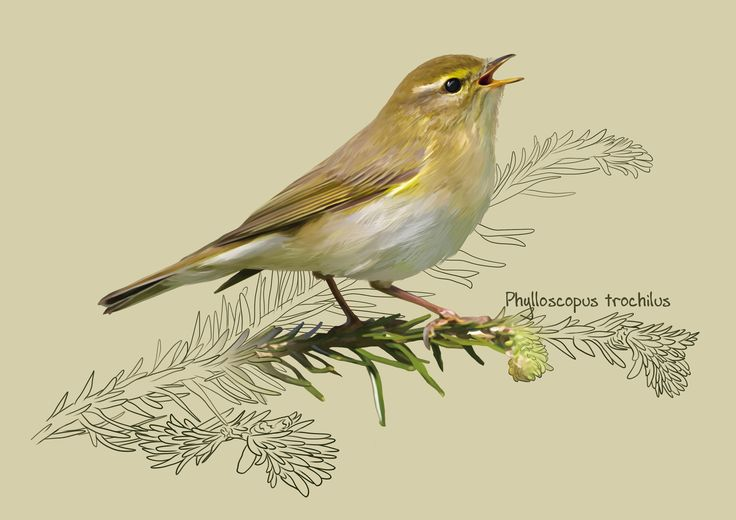 The willow warbler, Kate Kondrukhova on ArtStation at https://www.artstation.com/artwork/38E4J