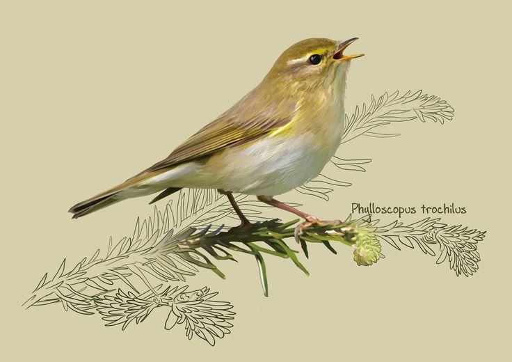 The willow warbler, Kate Kondrukhova on ArtStation at https://www.artstation.com/artwork/38E4J