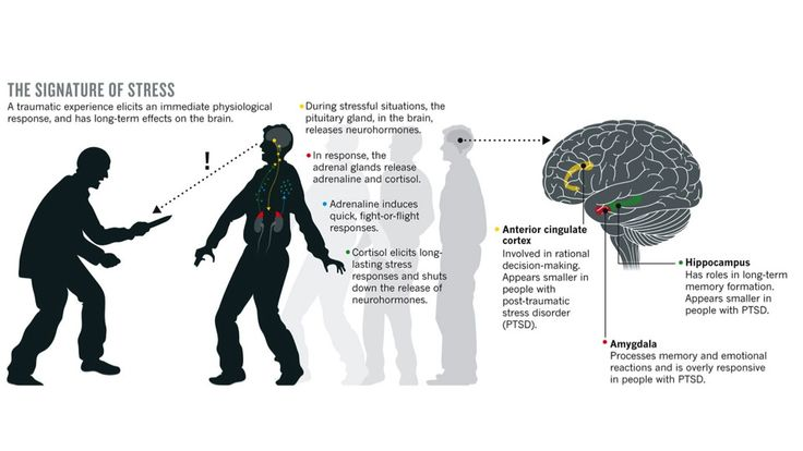 People with PTSD are shown to have 2 areas of the brain that are sensitive to STRESS SHRINK: the hippocampus,in the limbic system important for memory & the anterior cingulate cortex, part of the prefrontal cortex that is involved in reasoning & decision-making. A fMRI, which tracks blood flow in the brain, revealed that when people who have PTSD are reminded of the trauma, they tend to have an underactive prefrontal cortex & an overactive amygdala, which processes fear and emotion.