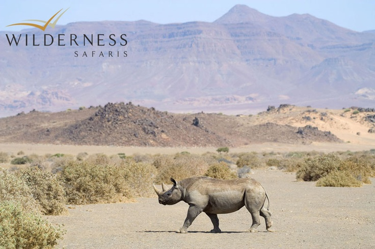 Doro Nawas Camp - Other game species complementing this landscape include gemsbok, kudu, springbok, steenbok and occasionally the rare desert-adapted black rhino. #Safari #Africa #Namibia #WildernessSafaris