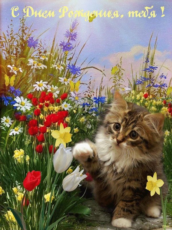 Открытка поздравляю котята