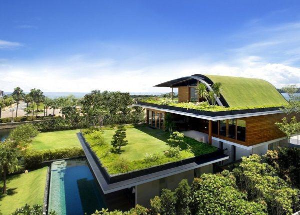 nachhaltiges Energiesparhaus-bepflanztes Dach