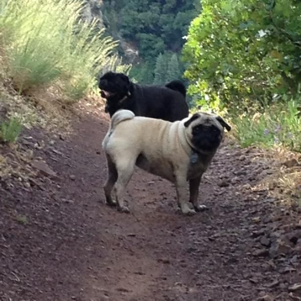 Mill Creek Canyon--Even-numbered days -- MUST be leashed at all times in all areas of the canyon. Odd-numbered days -- Are allowed off-leash only on trails. Dogs (and horses) must remain outside of Watershed Area. Please properly dispose of dog waste.