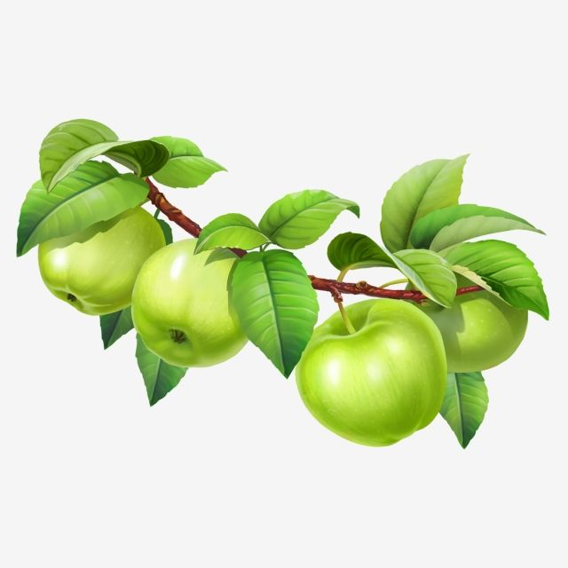 Apple On A Branch With Leaves Vegetarian Tree Vegetable Png Transparent Clipart Image And Psd File For Free Download Spring Flowers Background Apple Clip Art