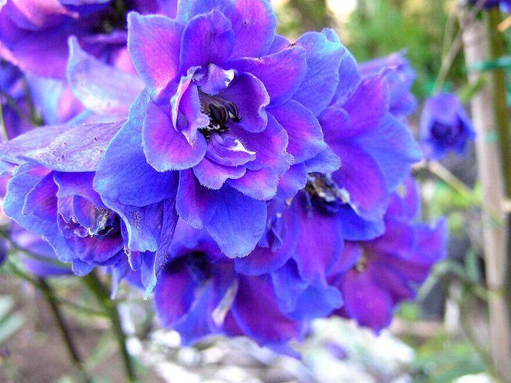Image result for july birth flower