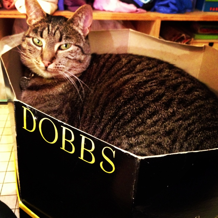 Cat in a hat box