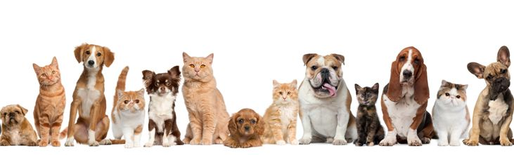 Worried about pet relocation? Here is the key