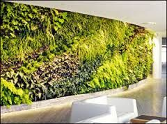 green wall - Google Search