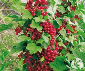 Las 25 mejores ideas sobre rboles frutales enanos en for Plantas frutales