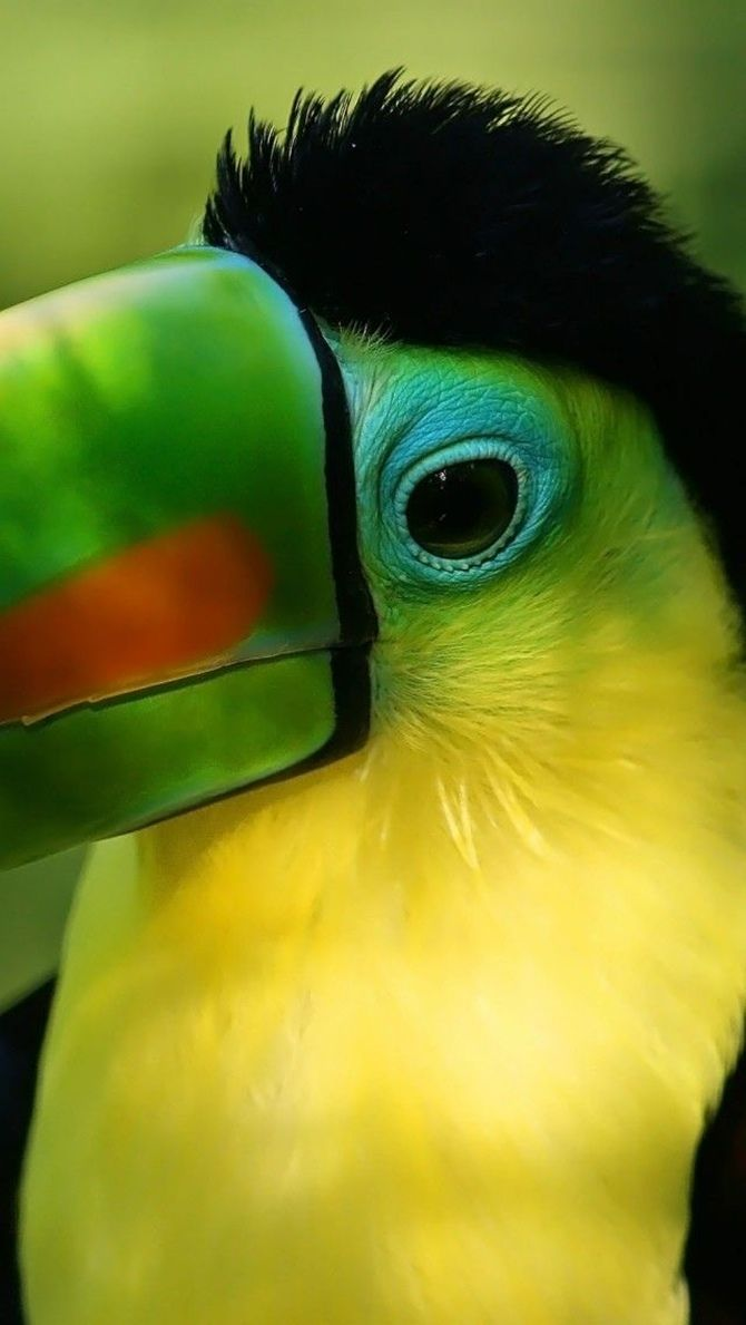 Ha ha. I love them so! I'll never forget the month I spent sailing around the Caribbean islands of Honduras on the sailboat of an ex. When we went to the bird and butterfly sanctuary on the isle of Roatan, a #toucan fell in love with me, and followed me around for hours. LOL. He was soooo cute! I have a framed picture of him on my wall. <3 ~ETS #soulmates #birds