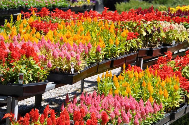 Fix For Fall Easy Annuals To Wake Up Your Garden