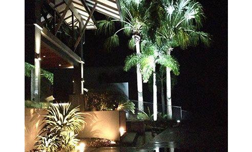 up lit palm trees