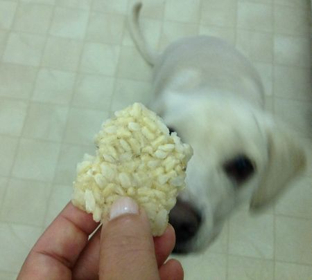 Frozen Rice Brittle Crunchies – Ridiculously Easy Dog Treat Recipe! I would add more favor by cooking the rice in low sodium beef or chicken stock.