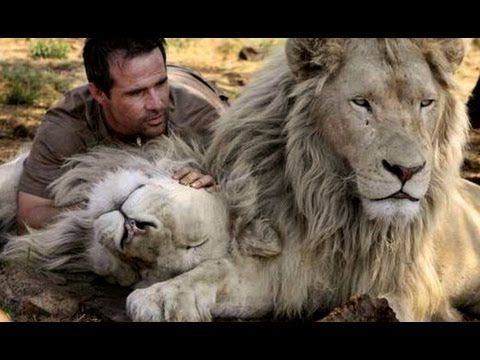 this is a dream of mine... ahhh ✺ Kevin Richardson - Part 1 of 3 - The Lion Ranger - Trouble in the Pride - Doku English
