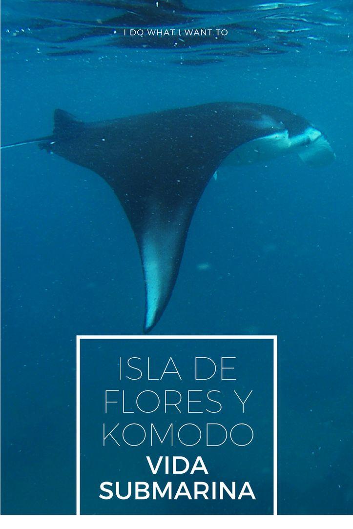 Isla de Flores, paraiso animal: dragones de komodo y vida submarina en Indonesia