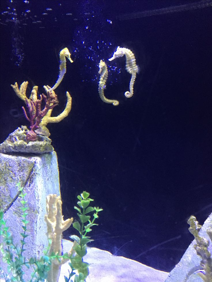 What are these seahorses are up to? Are they talking? Are the dancing?