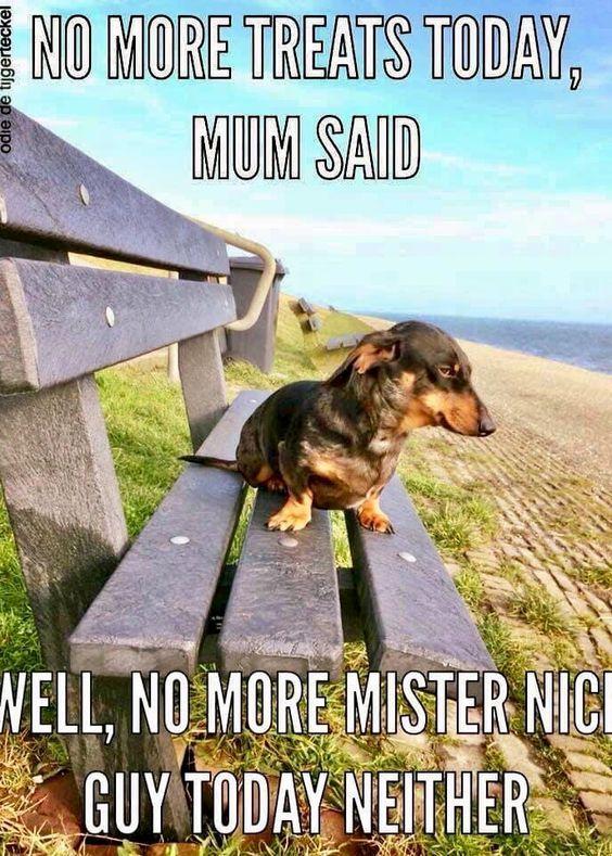 Dog Meme Compilation v2 - Gabe the Dog - Forsen Cancer Music