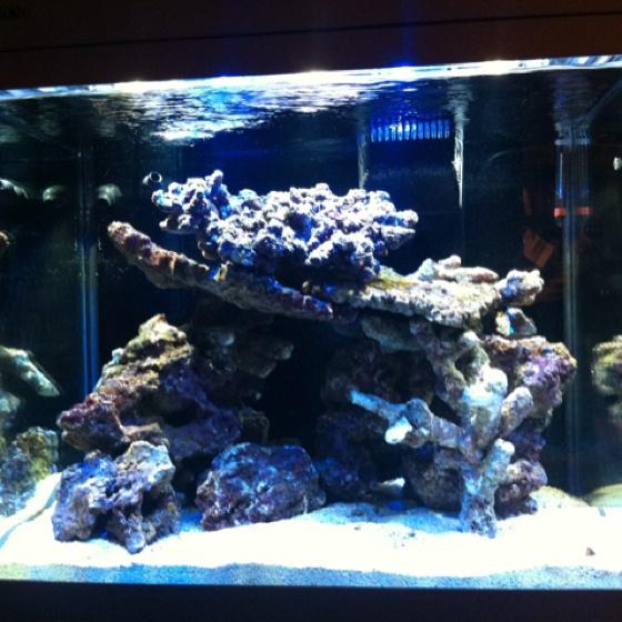 Live Rock Aquascape: Red Sea Max 130 Close Up Of Live Rock.