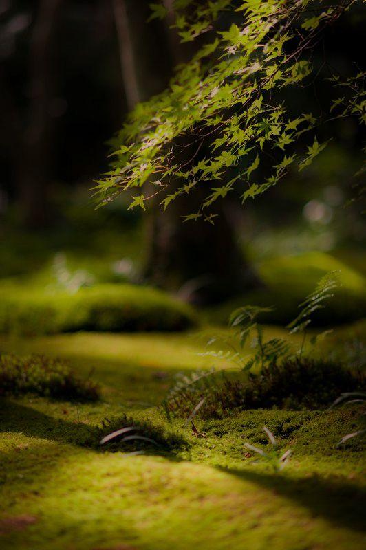 Mossy Garden  Gioji temple Kyoto