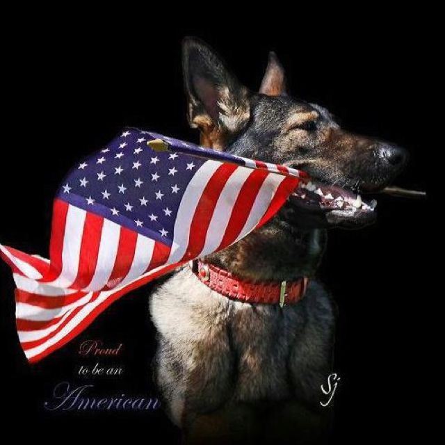 Military Working Dogs (MWD) /Partners - German Shepherd IF THIS DOESN'T GET YOUR HEART NOTHING ELSE DOES!