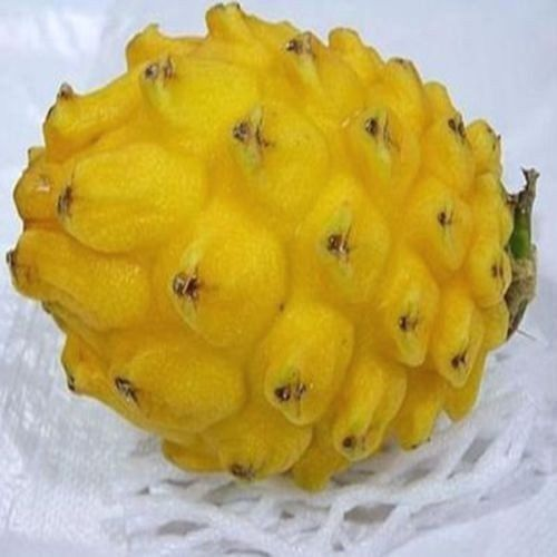 FD854 Yellow Dragon Fruit Seeds Hylocereus Pitaya Seeds Fruits Undatus Seed 10PC