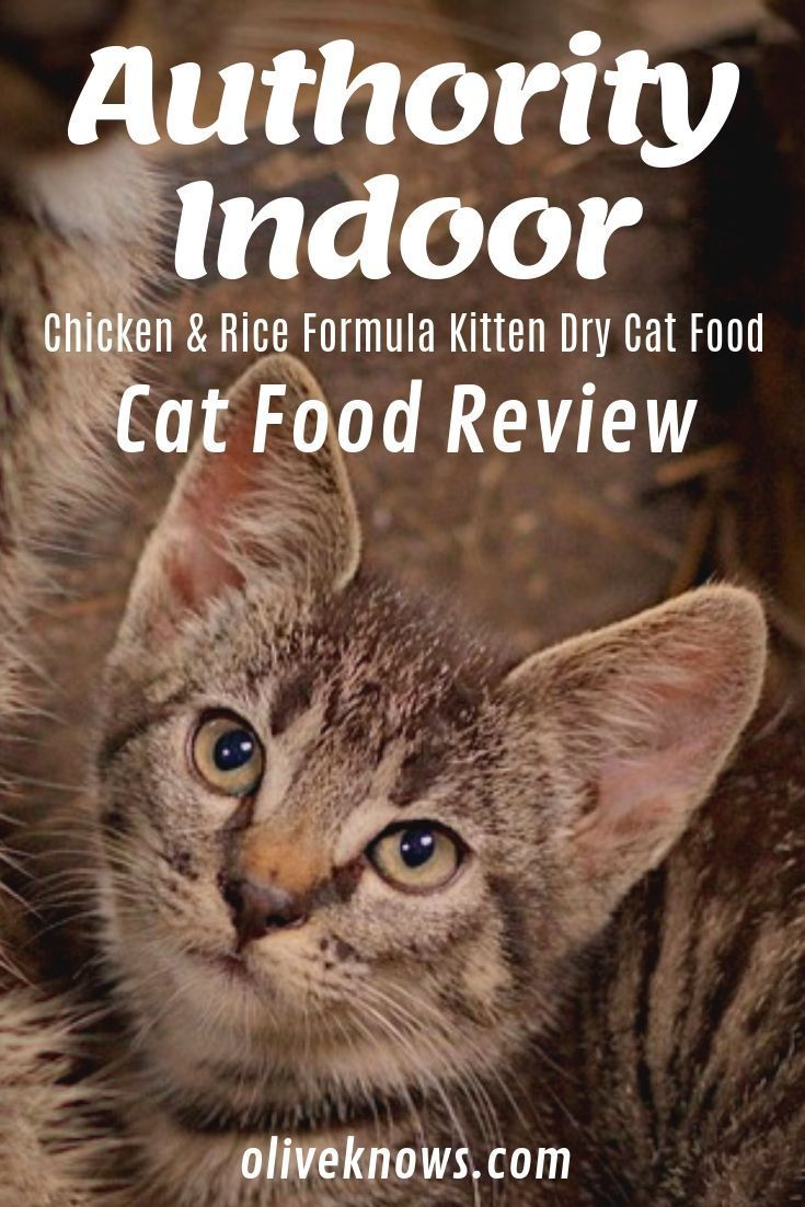 Authority Indoor Chicken Rice Formula Kitten Dry Cat Food Review Oliveknows Cat Food Reviews Dry Cat Food Cat Food