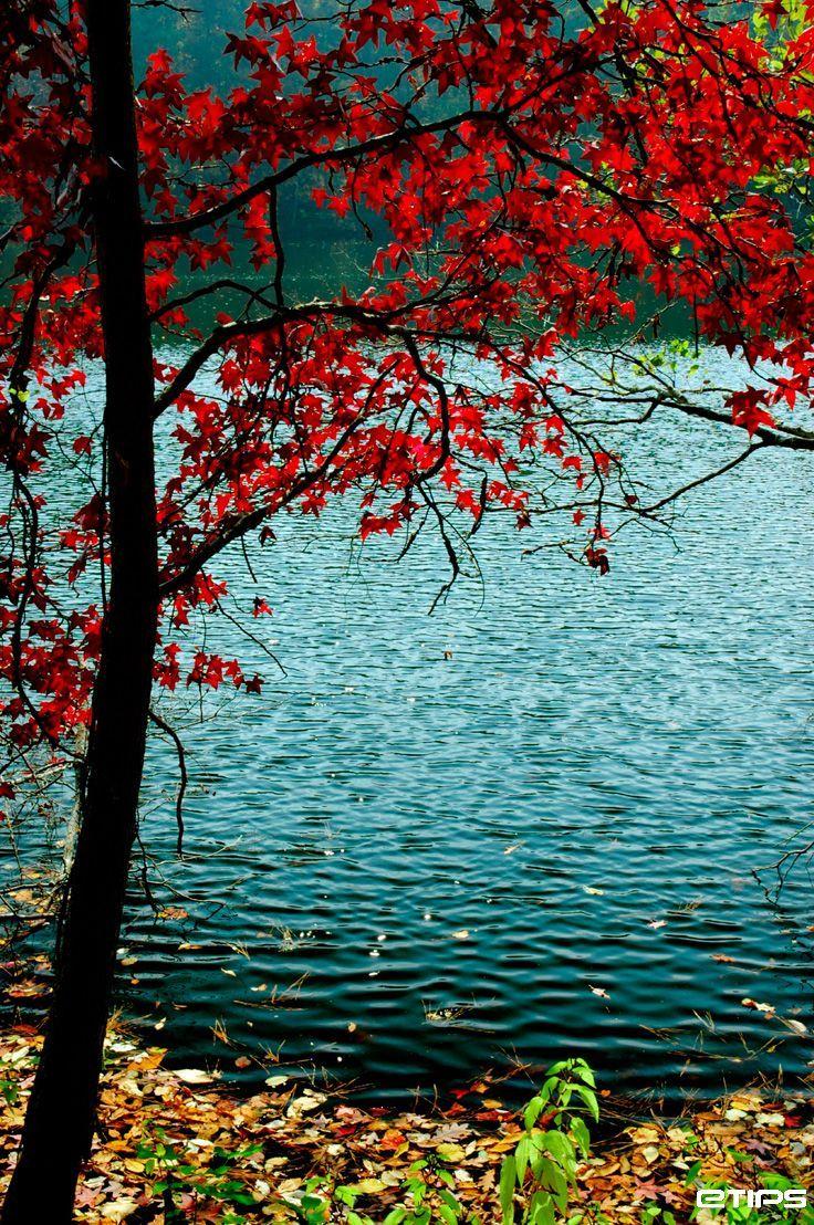 Taken beside the Stone Mountain | Atlanta, USA | by eTips Travel Apps http://www.etips.com/  Breathtakingly beautiful!