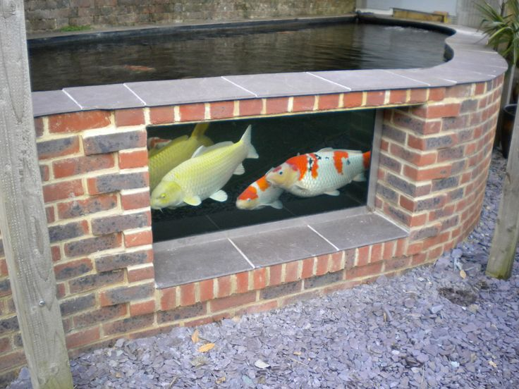 A raised pond with windows not brick though garden for Raised koi pond ideas