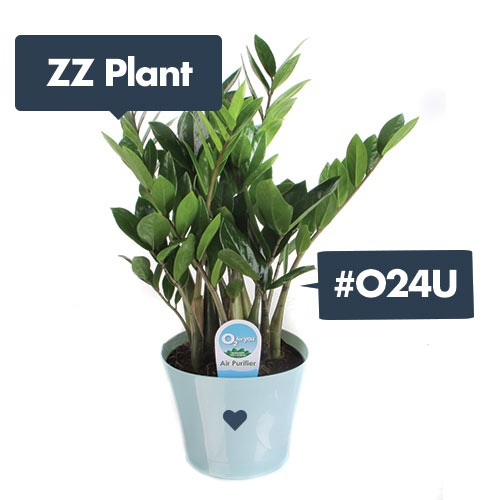 27 best images about o24u on pinterest happy earth ferns and sago palm. Black Bedroom Furniture Sets. Home Design Ideas