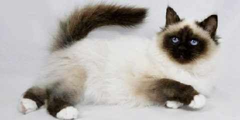 Jenis kucing persia yang ada. Macam-macam spesies dari ras kucing persia http://www.kucinglovers.com/jenis-kucing-persia/ #kucing #kucinglovers #pecintakucing #hewanpeliharaan #binatangpeliharaan #cat #catlovers #animal #kucingpersia #jeniskucingpersia #macam-macamkucingpersia #spesieskucingpersia #raskucingpersia
