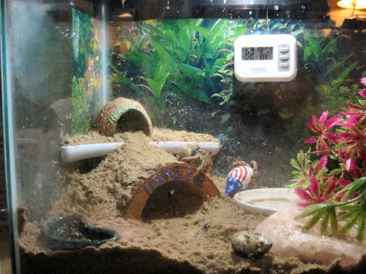 294 best images about Hermit Crabs on Pinterest | Crabs ...