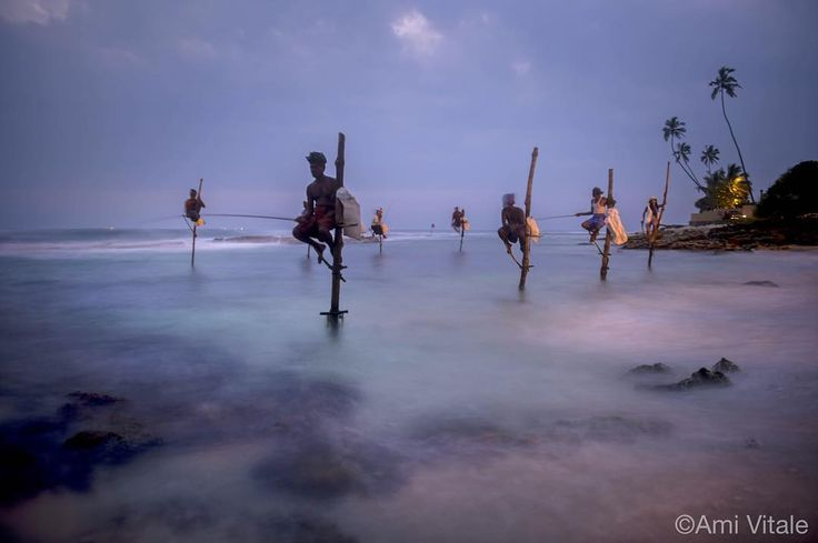Photo by @amivitale on assignment for @natgeo. Stilt fishermen attempt to catch fish in Weligama, in the southern coast of Sri Lanka. Fishing on stilts began during World War II because of food shortages and overcrowded fishing as men tried new ways to adapt to a changing environment. Nowadays many of the stilt fishermen are merely posing for tourists as the tradition fades and incentives from tourism are much greater. Share your images of the world's oceans with #NatGeoOceansDay to be part…