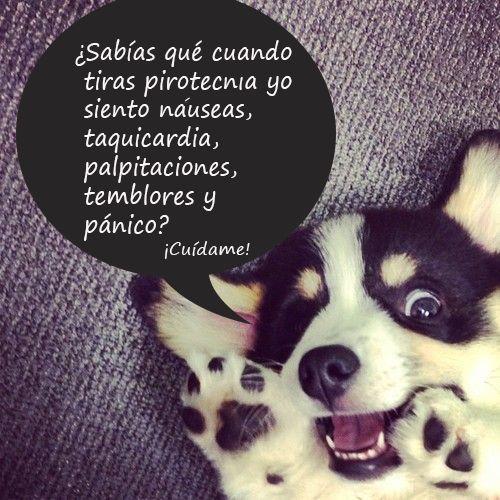 Los efectos de la pirotecnia en los perros.  #Perros #mascotas #CuidadosPerro
